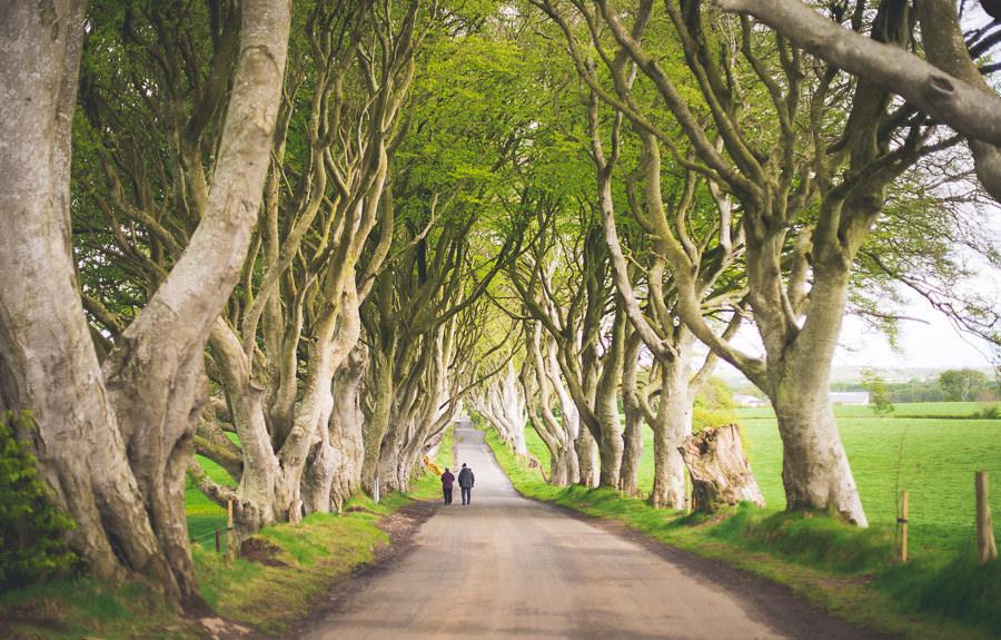 Dark Hedges, County Antrim (Image: Valerie Hinojosa, under Creative Commons)